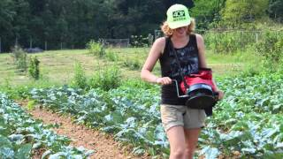 Overseeding Cover Crops into Fall Vegetables at Potomac Vegetable Farms