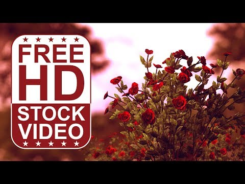 FREE HD video backgrounds – abstract out of focus animated trees with wind effect and red roses