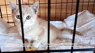 Парализованный котенок делает первые шаги shelter for animals до слез!