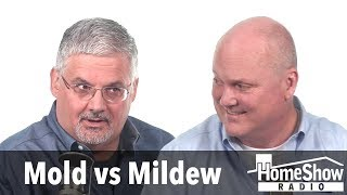 Mold vs Mildew