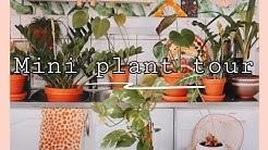 MINI PLANT TOUR + MEET OUR NEW KITTEN | VIHERKASVEJA 🌿