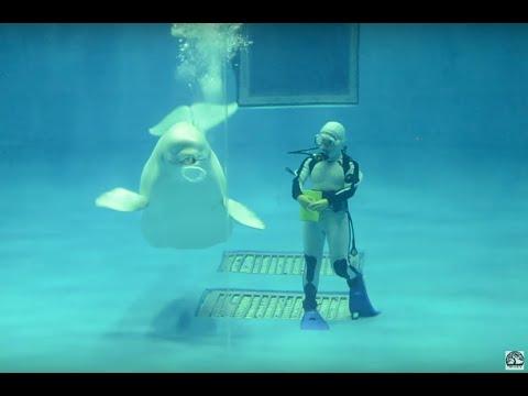 Underwater show.com