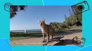 Покажи класс! - Прикольные ролики про животных - С добрым утром, малыши!