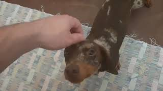 Day 4 - Petting a Dog Every Day