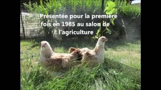 Présentation de la Poule Meusienne par la SAV pour le championnat de France 2016 à Epinal