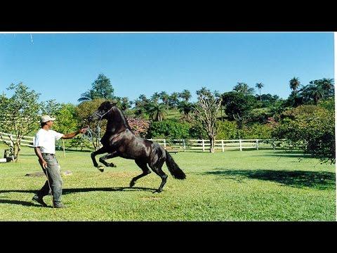 Curso Provas Equestres de Velocidade - Iniciação em Rédeas