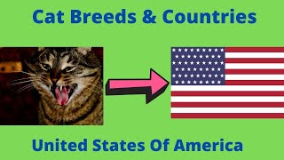 Cat Breeds & Countries #3 United States Of America