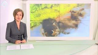В Новосибирском зоопарке домашняя кошка стала кормилицей для детёнышей енотов