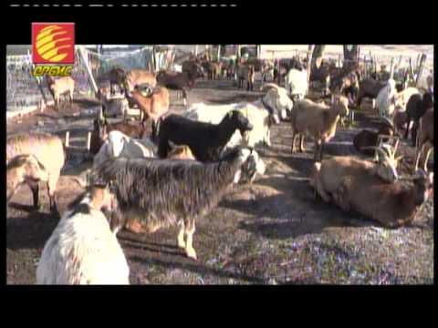 TV ORBIS - AGROBAROMETAR - AGRO VESTI 09 02 2014