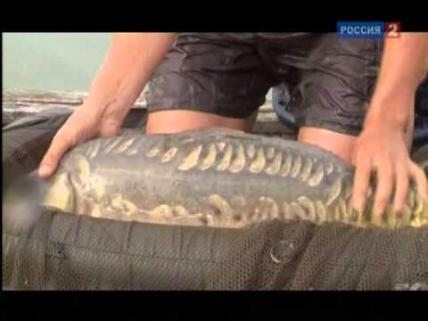 Любительское рыболовство. Карповые снасти
