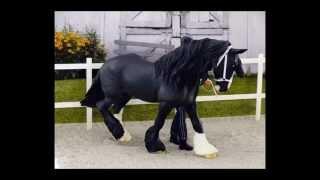 horse photo  breyer schleich