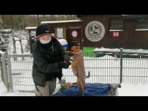Pfotenpflege bei Schnee und Eis