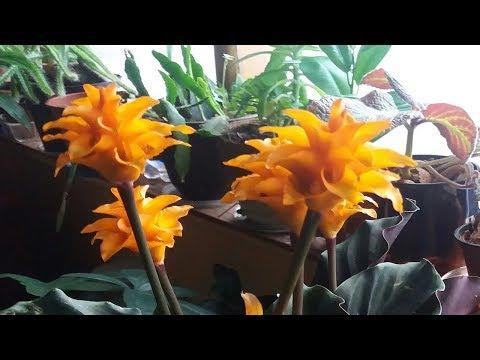 Калатея и пересаженные растения.