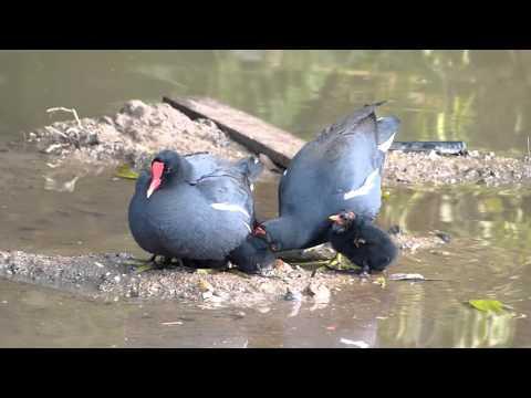 fauna brasileira FILHOTE REJEITADO animais brazilian vida selvagem silvestre pantanal cute baby