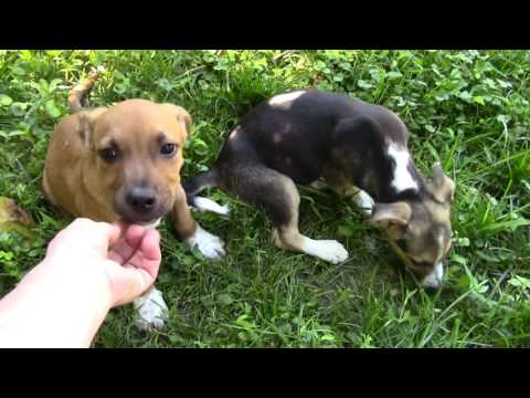 Rescue pups - Available week of June 22 2017