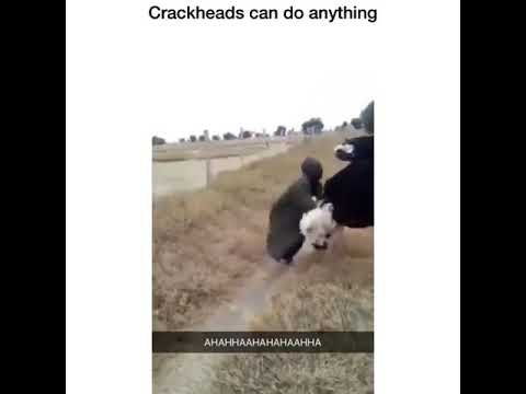 CRACKHEADS CAN DO ANYTHING!!**FUNNY**😂😂😂