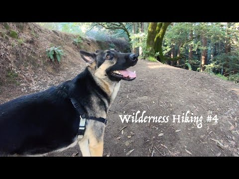 Hiking with German Shepherd #4 Hiking with Dog in the Bay Area Woods Part 4 of 4