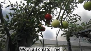 Aquaponic (Hydroponic)Vegetable Garden in Mar Vista, CA by EVO Farms