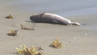 Could red tide be in Brevard County?