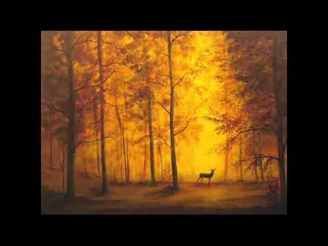 Kashiwa Daisuke - Program Music 1 - Stella