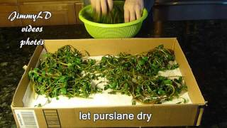 怎样制作干马齿苋, how to dry purslane for winter use