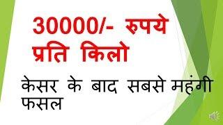 vanilla farming 12 लाख रुपये प्रति एकड़ कमाये केसर की खेती के बाद महंगी फसल ये