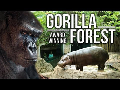 Zoo Tours Ep. 32: The Award Winning Gorilla Forest || Louisville Zoo