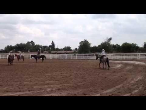 Paula Bausch horsemanship clinic