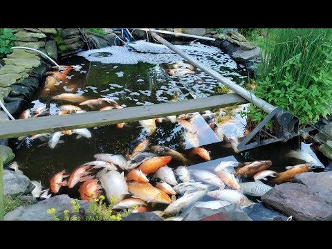 Fit a float switch on your pond!  Don't let your pond empty!