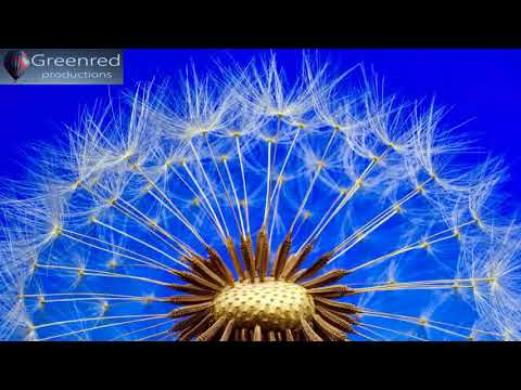 Happiness Frequency - Serotonin, Dopamine and Endorphin Release Music, Binaural Beats Relaxation