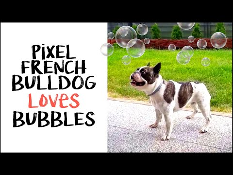 Pixel loves bubbles