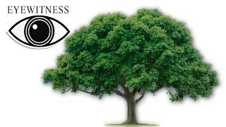 видео Деревья