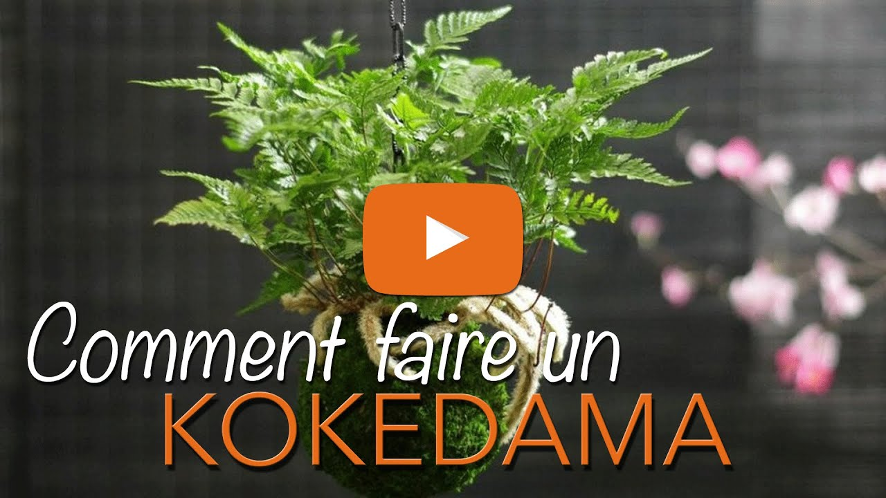 Comment faire un kokedama kokedama suspendu kokedama for Jardin suspendu