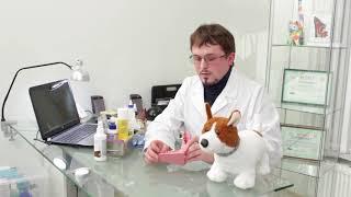 Видеоурок Ответственное отношение к животным (возрастная группа 15-18 лет)