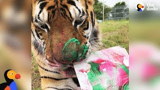 LIVE: Rescue Tiger Paints at Animal Sanctuary | The Dodo LIVE