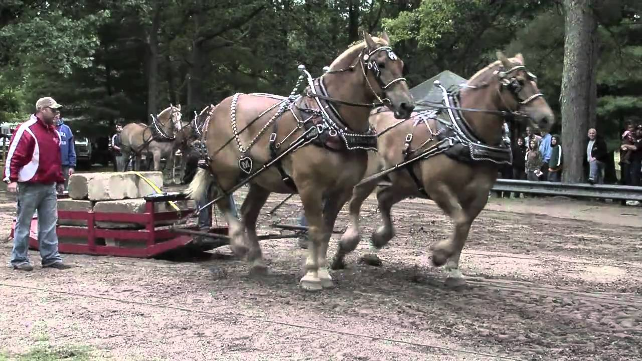 2010 Brethren Horse Pull Part 1 Of 3 Youtube