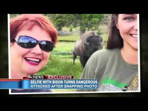 Bison Attacks Woman Posing For Selfie At Yellowstone National Park