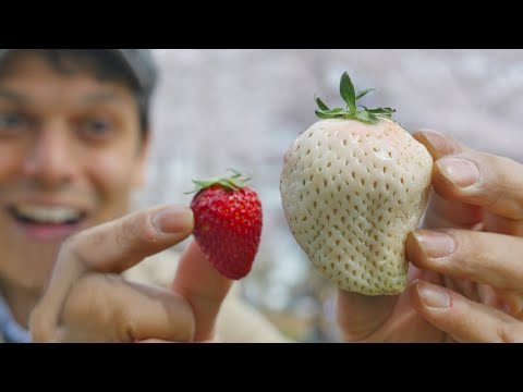 Japan's White Strawberry: Luxury Fruit Unboxing & Adventure ★ ONLY in JAPAN