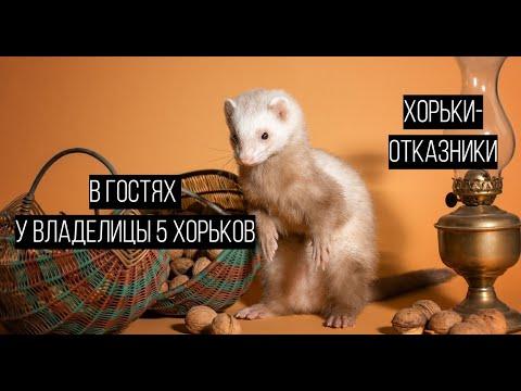 В гостях у ВЛАДЕЛИЦЫ 5 хорьков: хорьки-отказники