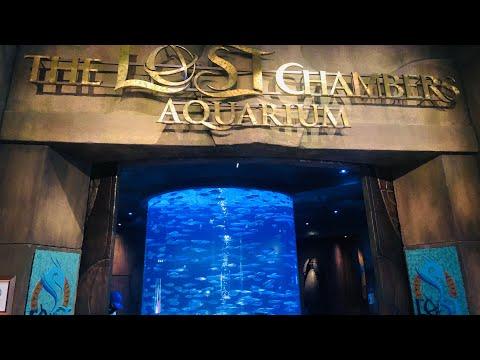 The lost chambers aquarium | Atlantis the Palm, Dubai | 4K