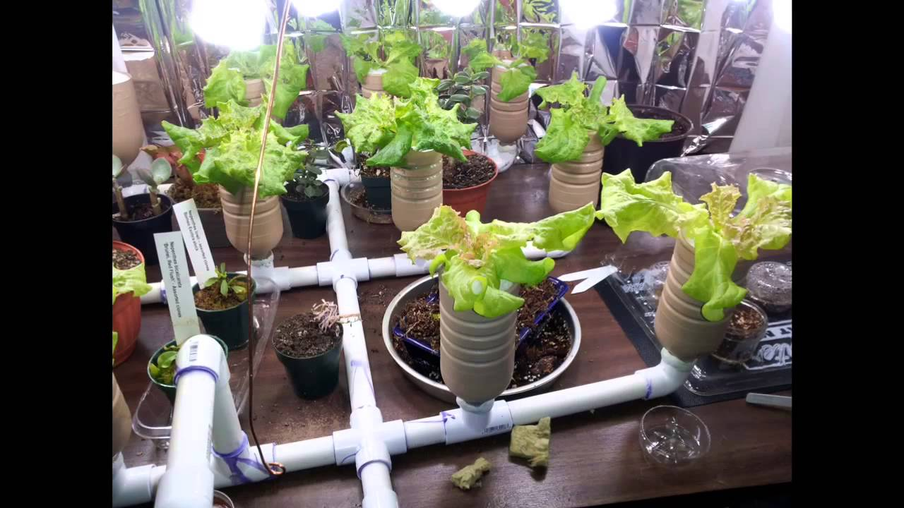 Hydroponic vs soil grown lettuce youtube for Soil vs hydro