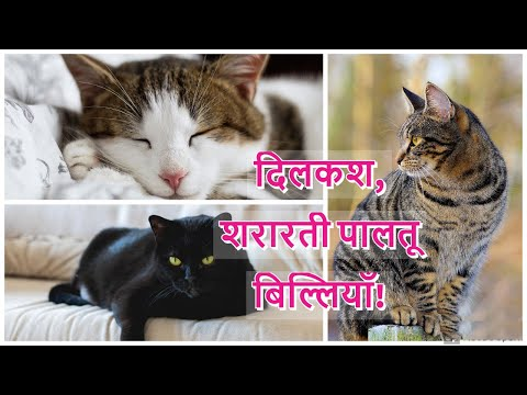 Three Amazing Pet Cats (White, Brown & Black). Watch complete video (Like, Share & Subscribe)