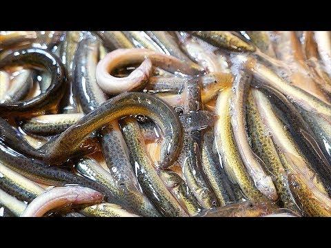 Japanese Food – WORM FISH HOTPOT Fried Loach Tokyo Seafood Japan
