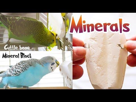 Budgie Minerals | Cuttlefish Bone And Mineral Block