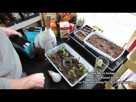 Complete Tomato Seed Starting Guide for New Gardeners: Lighting to Acclimation - Table of Contents