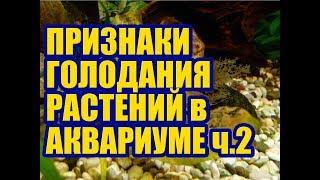Признаки минерального голодания у Аквариумных растений. Макроудобрения ч.2. Удобрения для аквариума