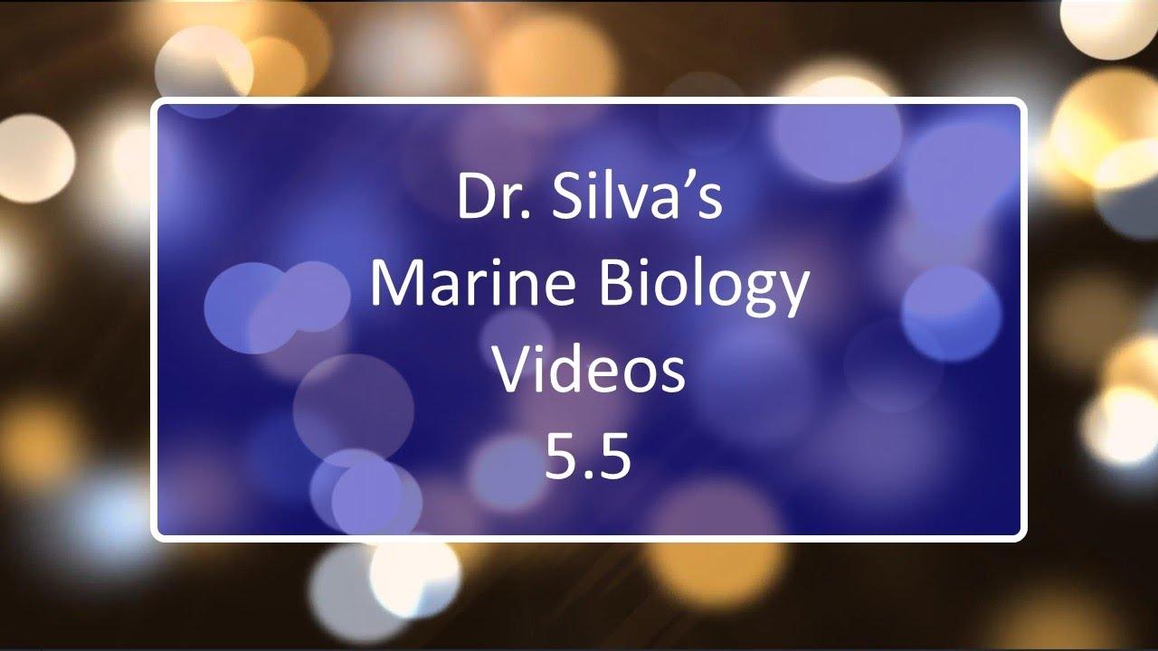 Phylum Arthropoda Marine | Free Images at Clker.com ...  |Phylum Arthropoda Marine