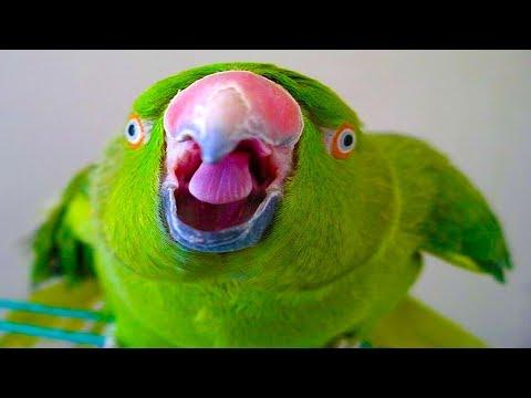 Birds Love Speaking! - Funny Birds Talking Compilation 2018