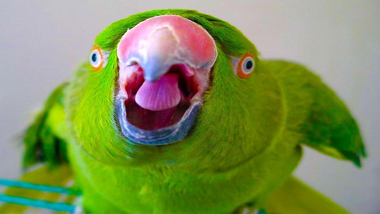 Birds love speaking funny birds talking compilation 2018 youtube - Funny bird pics ...