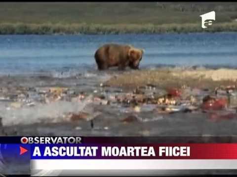 O femeie a ascultat la telefon cum patru ursi ii mananca fiica 18 AUGUST 2011